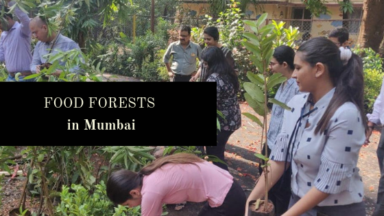 Food Forests in Mumbai